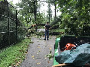Curator Henry Ortmeyer surveying tree damage at front gate